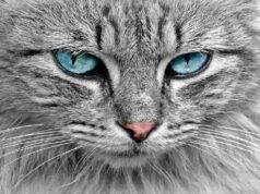 fusa gatto calmano mente e corpo