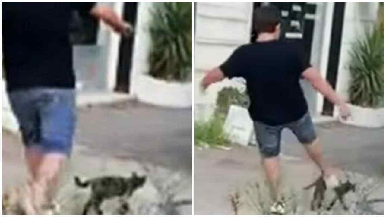 gatto ucciso a Napoli