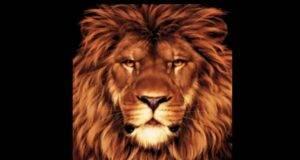 test visivo leone e topo