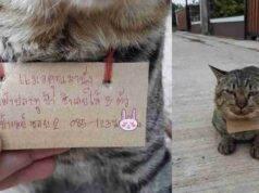 gatto scompare per tre giorni e torna con debito da pagare