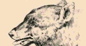 TEST lupo: volto uomo