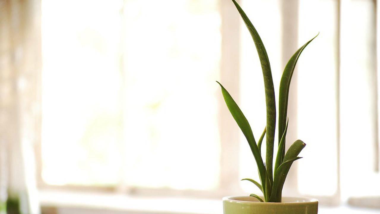 piante che purificano