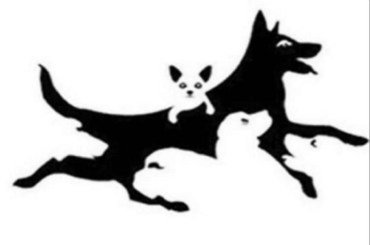 Test: Quanti cani vedi? Cosa svela su di te