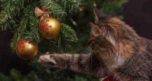 natale gatto