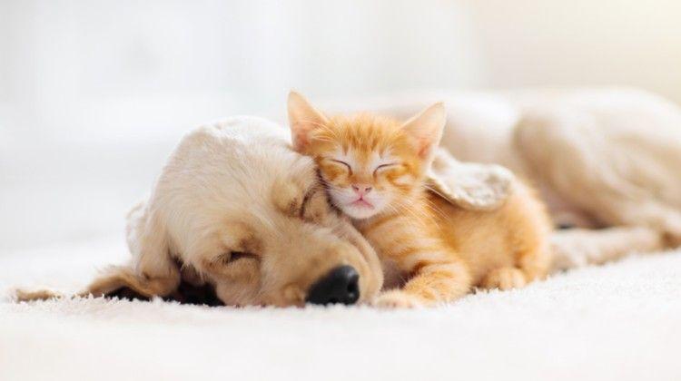 animale domestico - cane e gatto