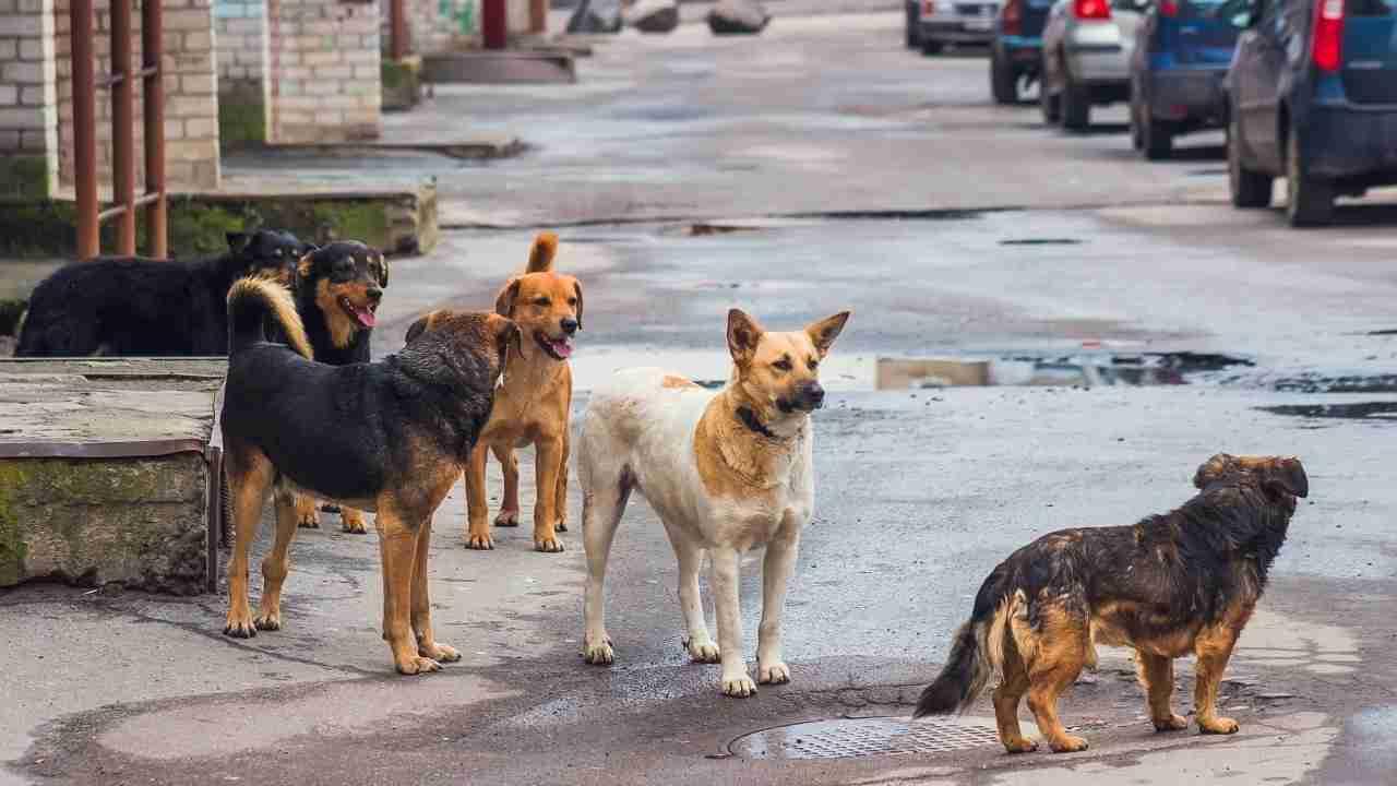 report avvelenamento cani