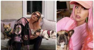 Lady Gaga rapimento cani