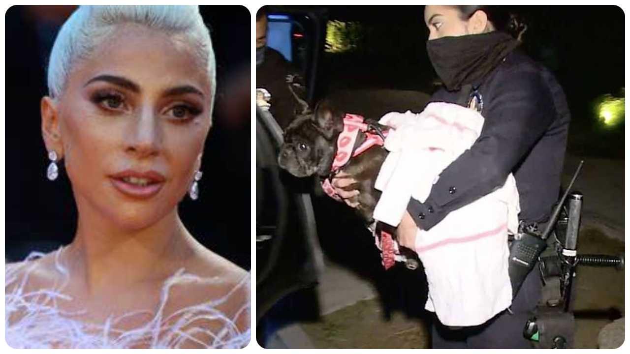 Lady Gaga, ritrovati i cani rapiti