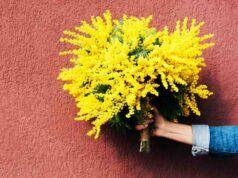 Festa delle donna, la storia, il perché della mimosa e igli eventi a cui partecipare