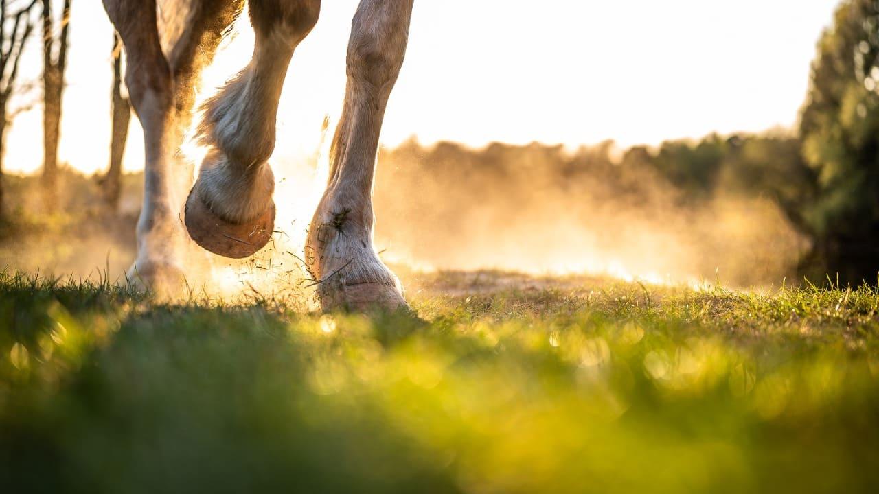 bambino calpestato da un cavallo